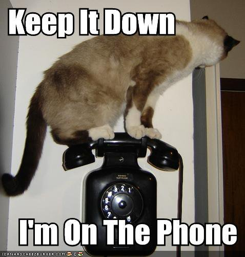 lolcat-is-on-the-phone3