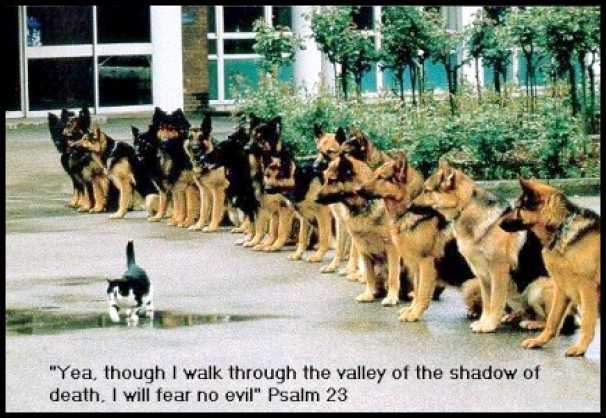 valley_shadow_kitten